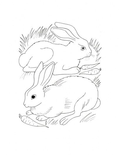 405x525 Bunny Rabbit Coloring Pages Rabbits Eating Carrots Coloring Page