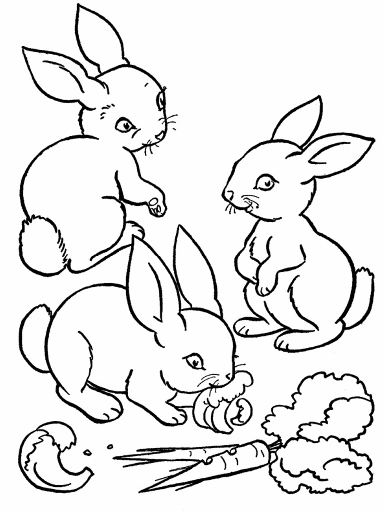 768x1024 Important Realistic Bunny Coloring Pages Download For Kids