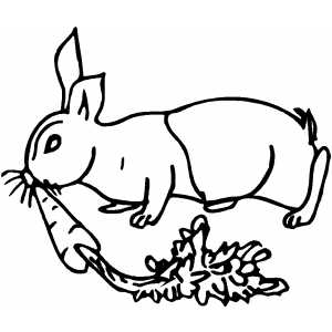 300x300 Rabbit With Carrot Coloring Page