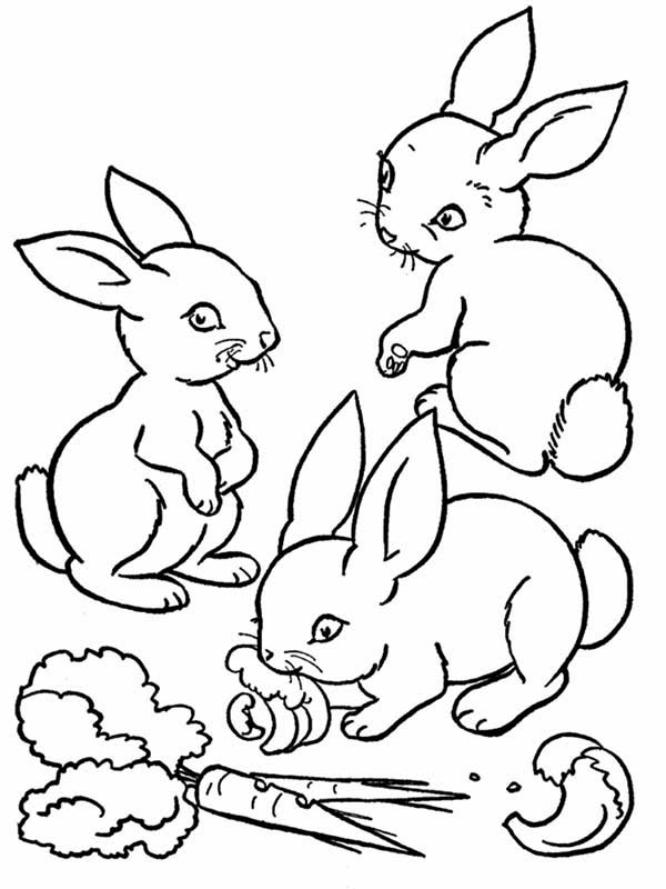 600x800 Three Cute Bunnies Eating The Carrot Coloring Page