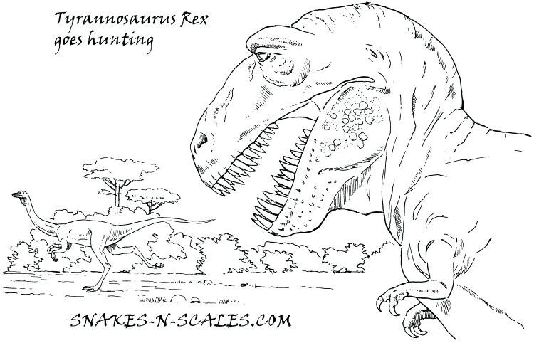 750x482 Burmese Animal Coloring Pages Tyrannosaurus Coloring Page Color