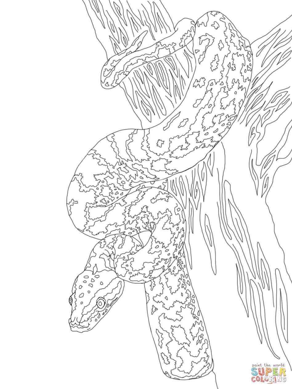 948x1264 Burmese Python Coloring Pages Online Coloring Printable