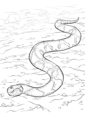 360x480 African Rock Python Coloring Page