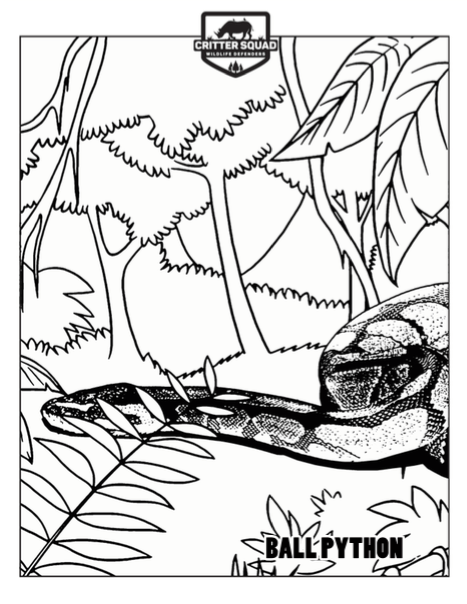 467x604 Snake Coloring Pages