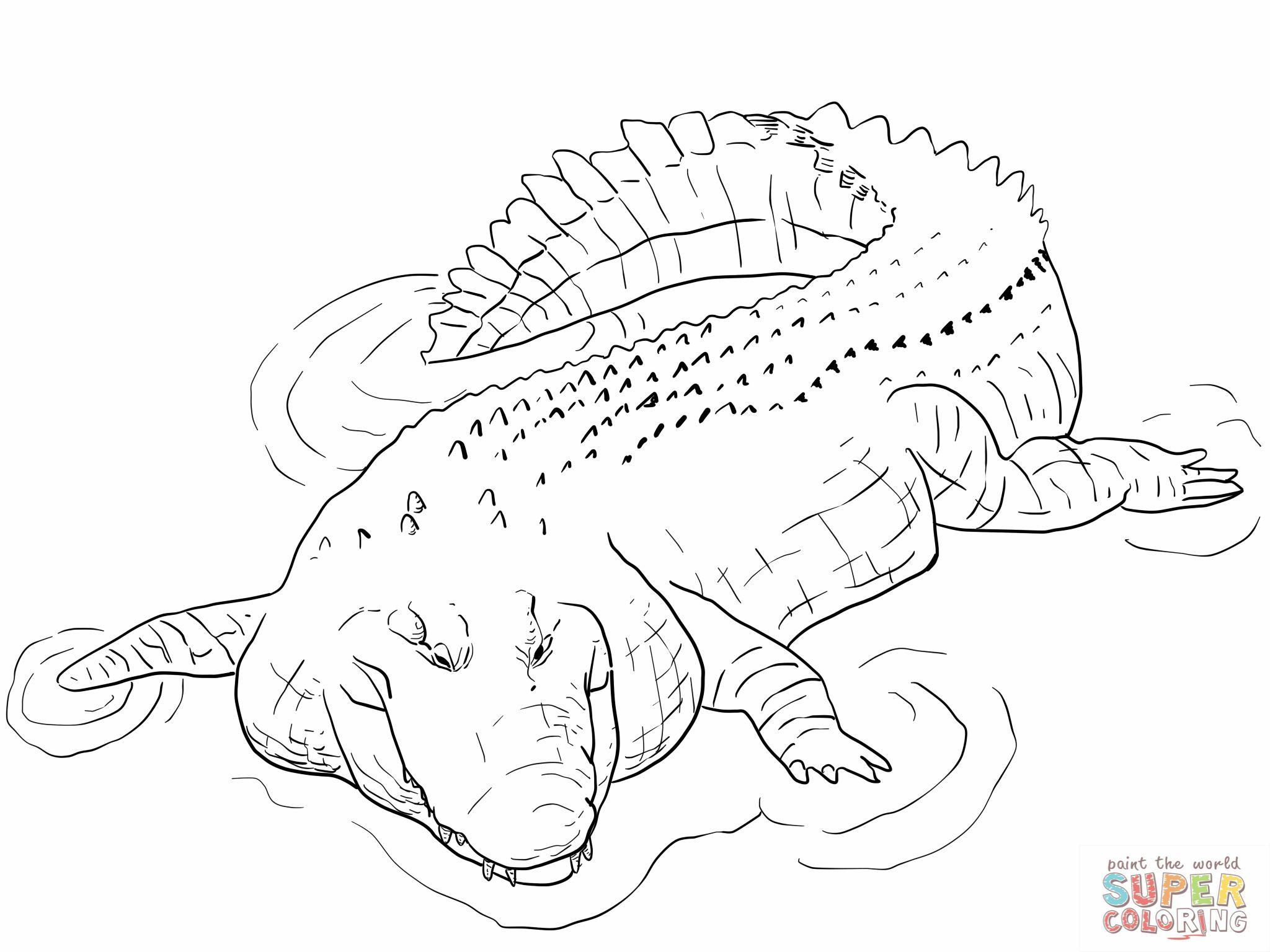 2048x1536 Indo Pacific Saltwater Crocodile Coloring Page Alligator Coloring