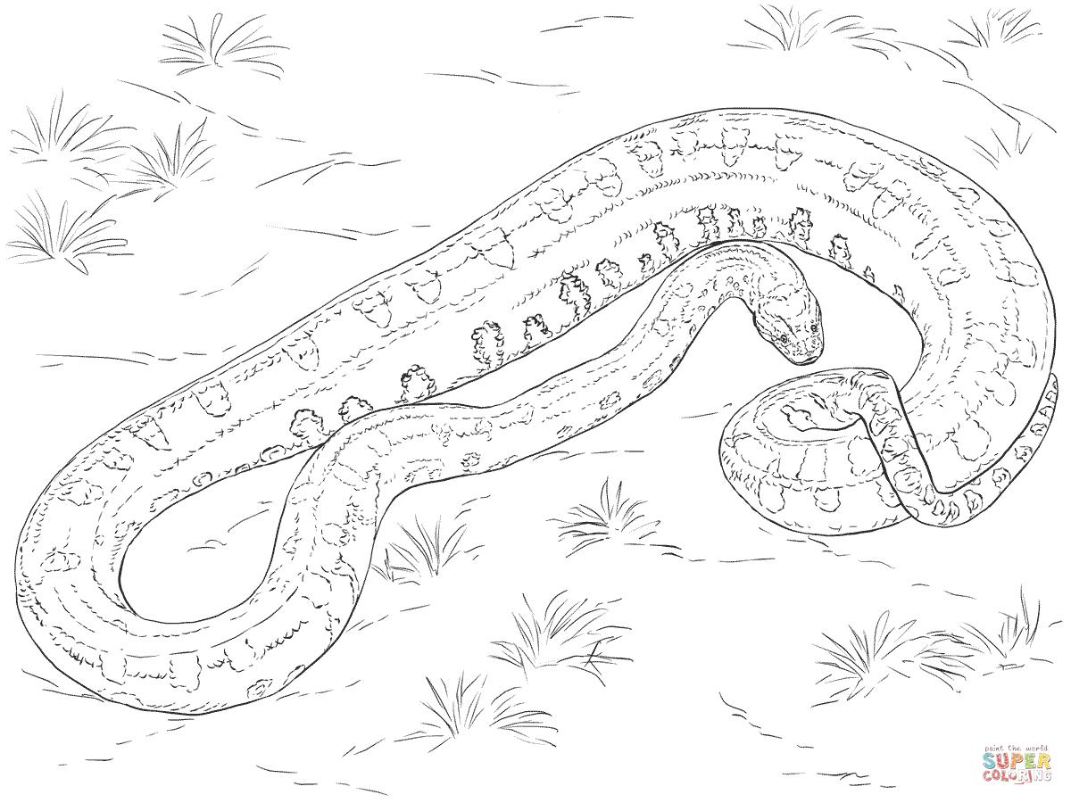 1200x900 Anaconda Coloring Page