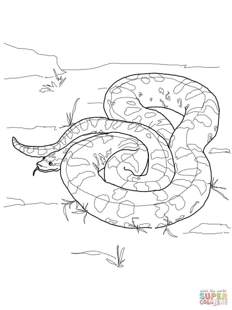768x1024 Anaconda Download Coloring Page