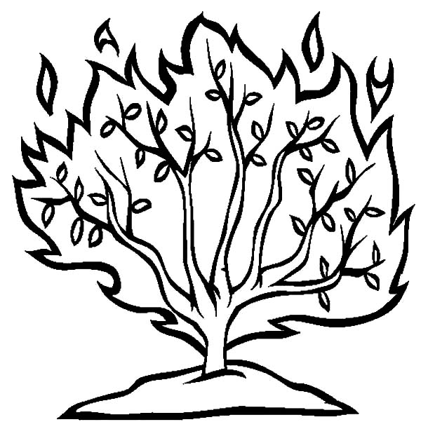 600x612 Burning Bush Moses Netart