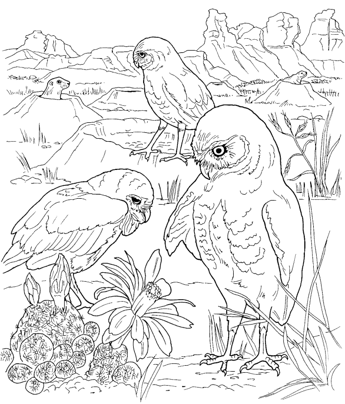694x813 Bird Coloring Pages