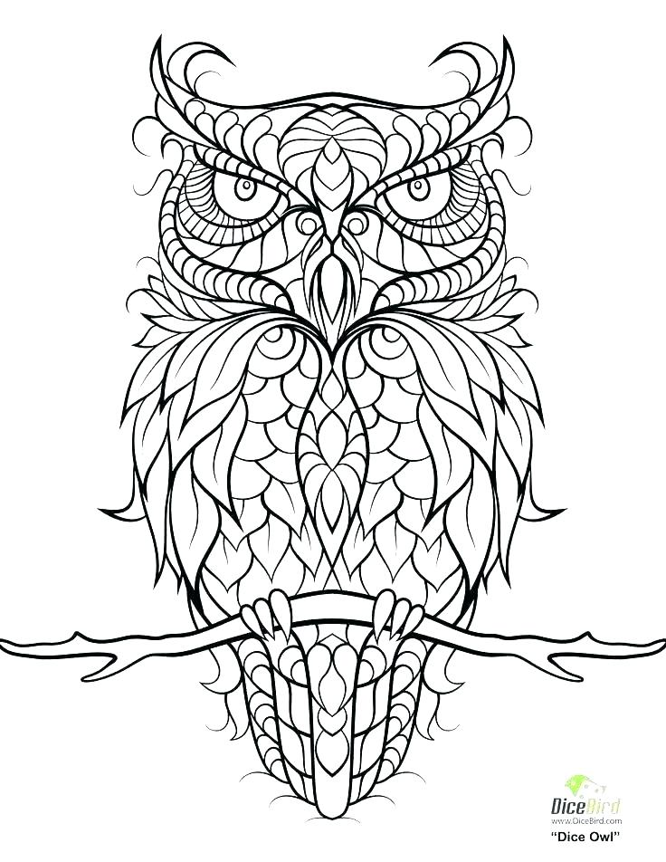 736x952 Owl Coloring Pages Pictures Of Owls To Print Free Pictures Of Owls
