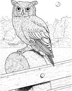 236x296 Printable Owl Coloring Page Coloring Pages Owl