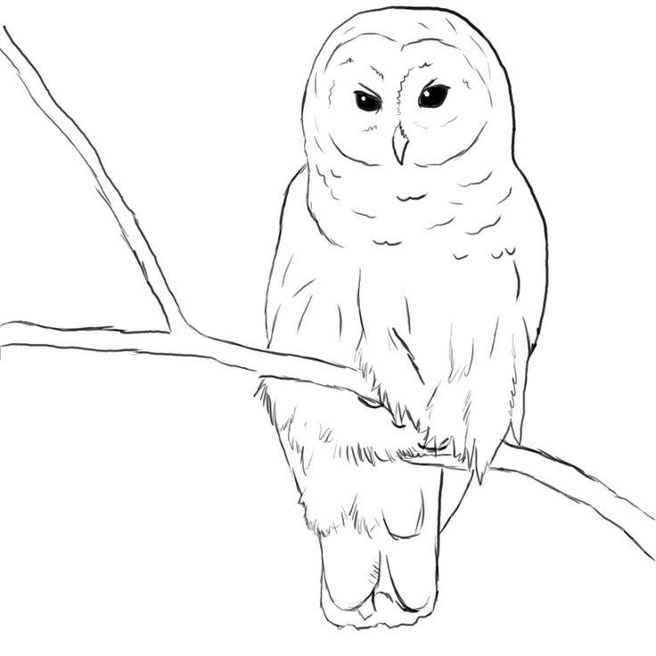 736x736 Burrowing Owl Clipart Snowy Owl