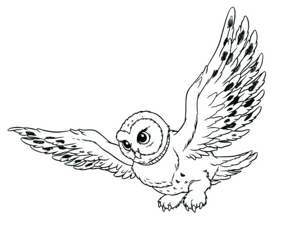 580x441 Snowy Coloring Pages Kids Snowy Owl Coloring Pictures