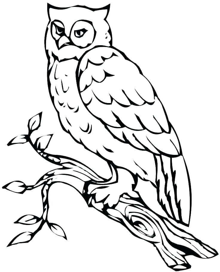 736x908 Snowy Owl Coloring Pages Barn Owl Coloring Pages Printable Owl