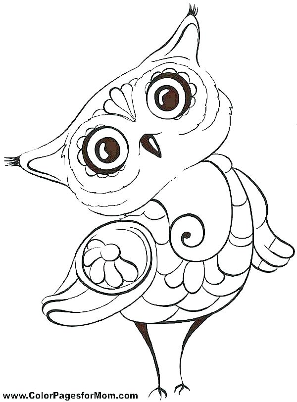 600x812 Owl Coloring Page