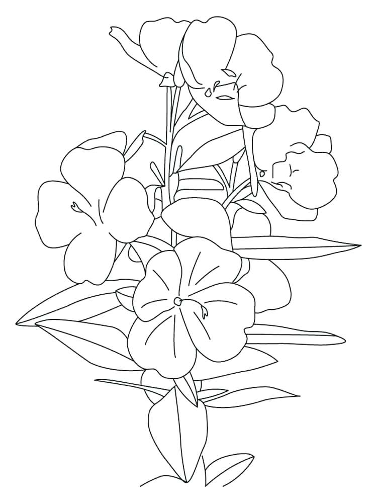 750x1000 Buttercup Coloring Pages Surprising Colour Pages Best Of Chase