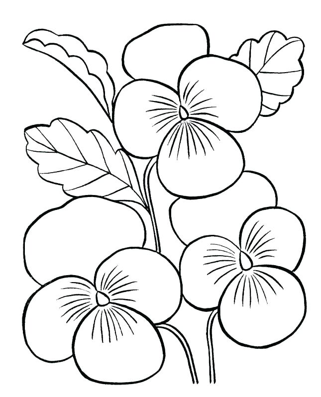 645x798 Coloring Page Of Flowers Flower Coloring Pages Free Buttercup
