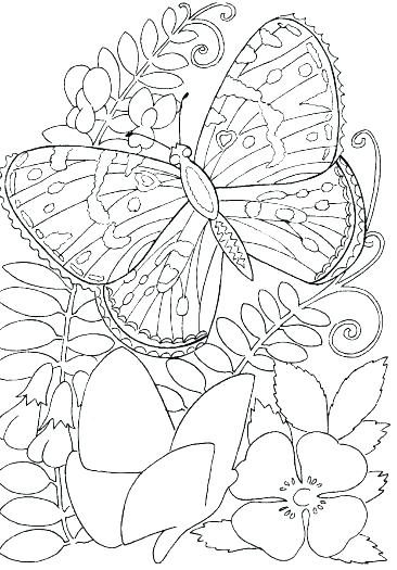 366x525 Flower Coloring Pages Free Vector Format Buttercup