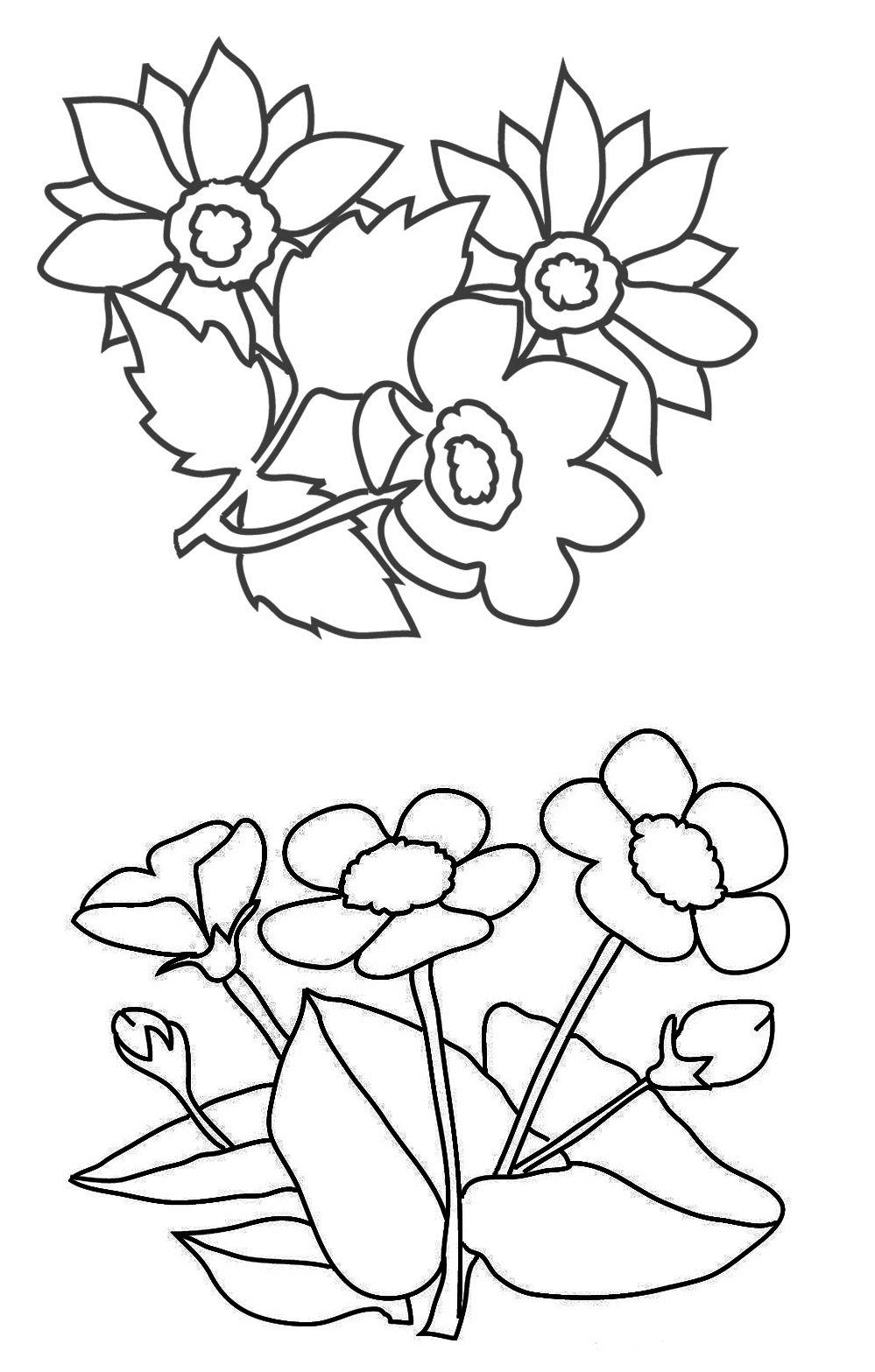999x1567 Amazing Cochlospermum Vitifolium Or Buttercup Tree Coloring Page