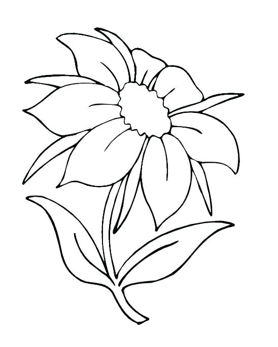 548x685 Flower Bouquet Coloring Pages