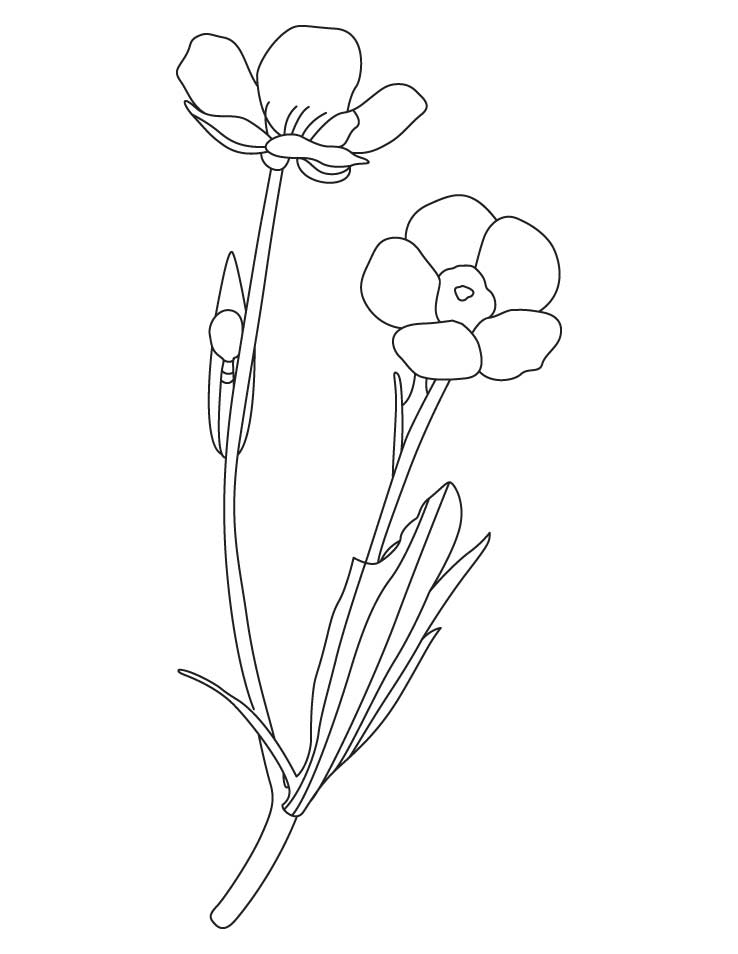 738x954 Buttercup Flower Coloring Pages