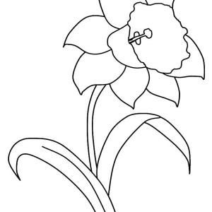 300x300 Buttercup Flower Coloring Pages Color Bros