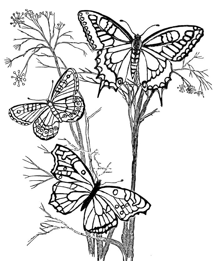 Butterfly And Flower Coloring Pages For Adults At