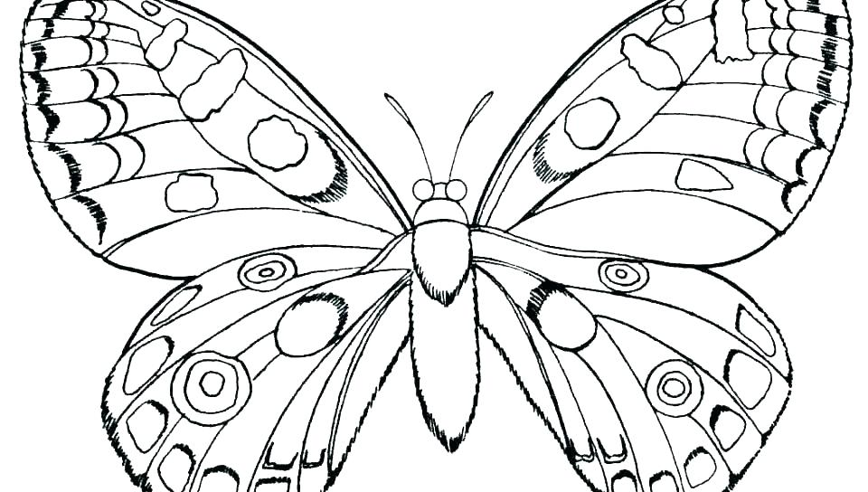 960x544 Coloring Page Of Butterfly Coloring Page Of Butterfly Free