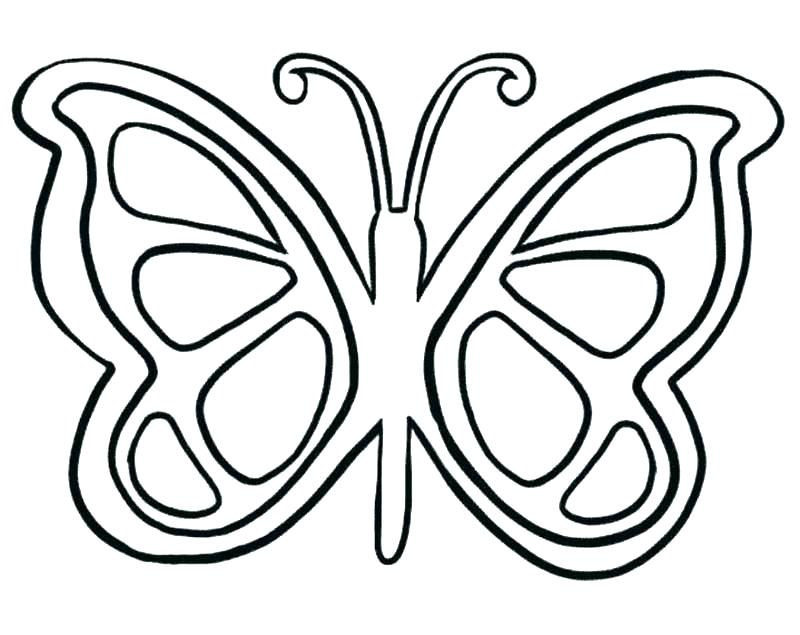 800x635 Terrific Free Butterfly Coloring Pages Fly Coloring Page House Fly