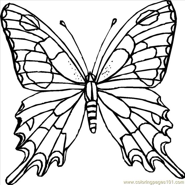 650x651 Butterfly Coloring Pages Online