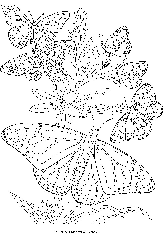 681x980 Free Printable Adult Butterfly Coloring Page Crafts I Like