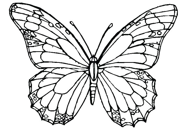 752x548 Monarch Butterfly Coloring Pages Free