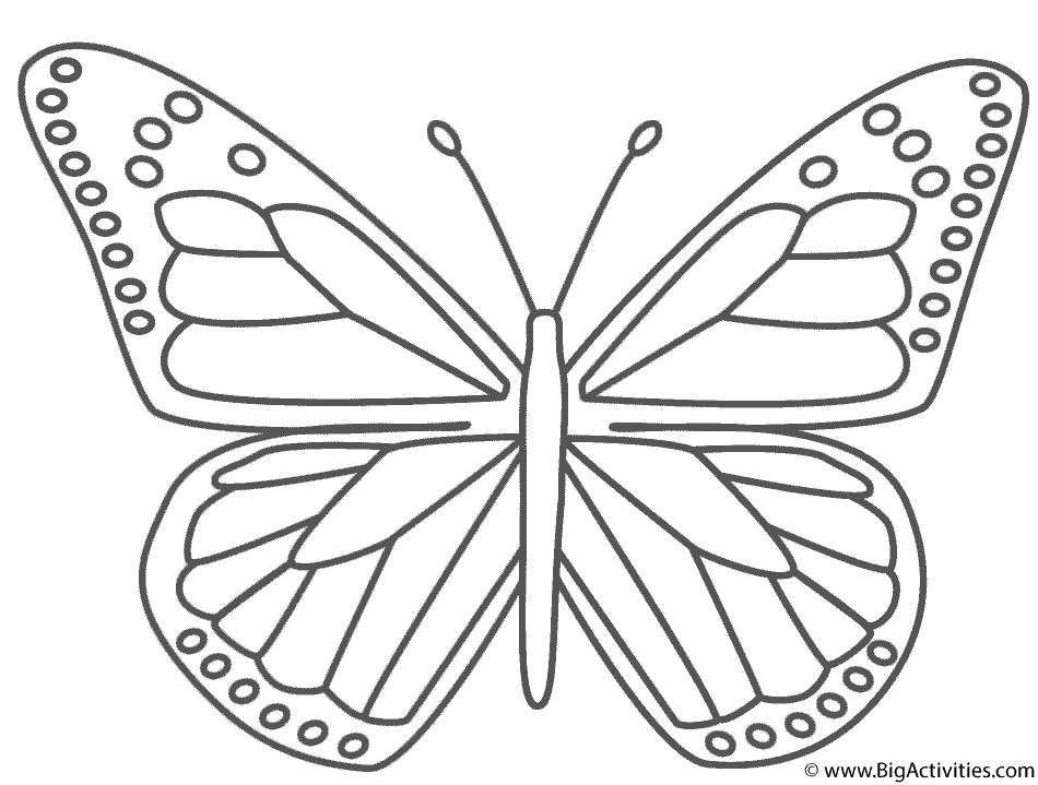 950x719 Monarch Butterfly Coloring Sheet Monarch Butterfly Coloring Page