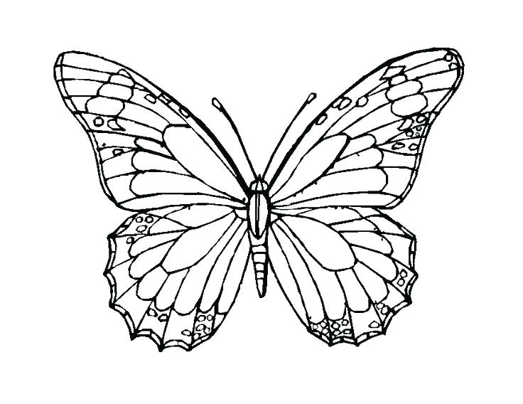 736x568 Mosaic Coloring Pages Free Mosaic Coloring Pages Butterfly Color
