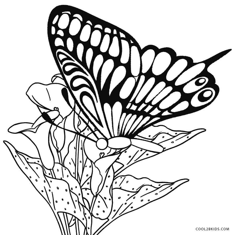 900x900 Printable Butterfly Coloring Pages For Kids