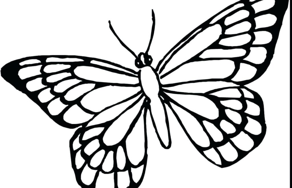 1024x662 Coloring Page Butterfly Coloring Pages Printable And For Kids