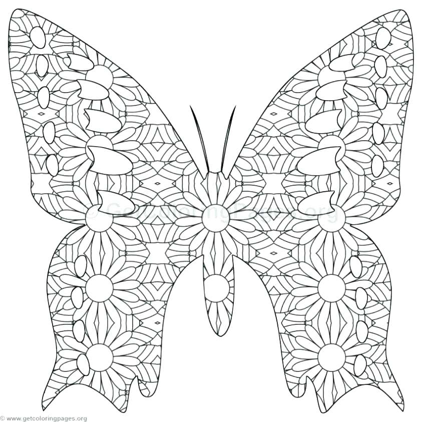 843x843 Butterfly Coloring Pages Preschool Coloring Pages