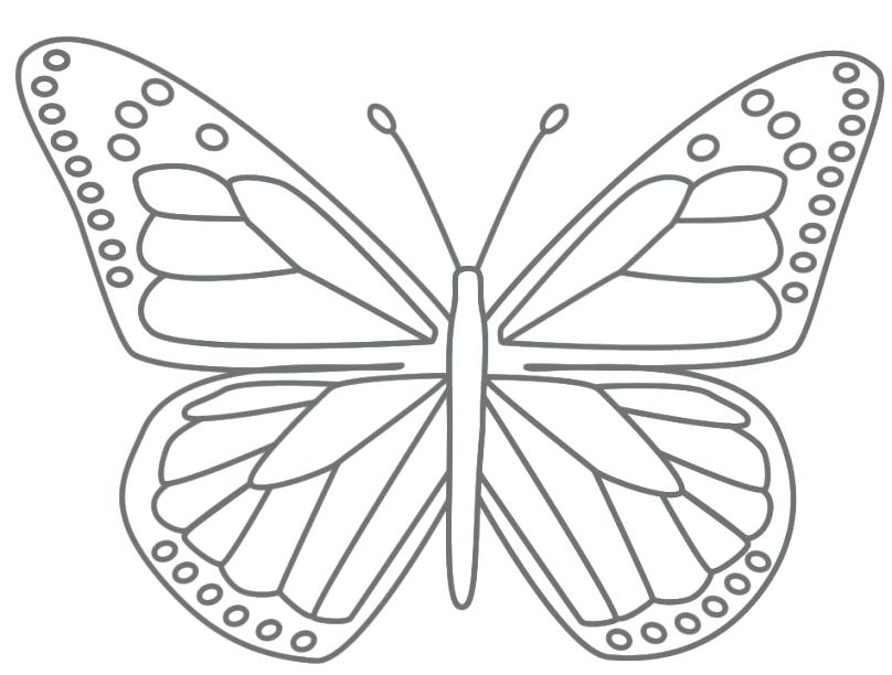 808x612 Simple Butterfly Coloring Pages Page For Kids Pertaining To Free