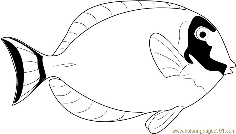 800x456 Powder Blue Surgeonfish Coloring Page