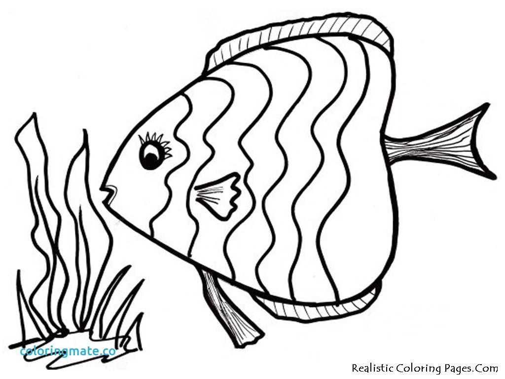 1024x768 Tropical Fish Coloring Pages Coloring Page Fish Unique Tropical