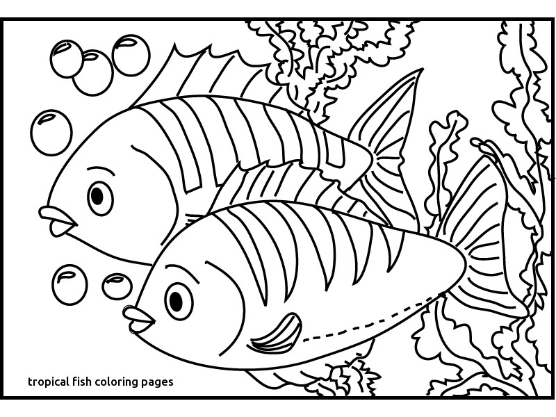 800x600 Tropical Fish Coloring Pages Printable