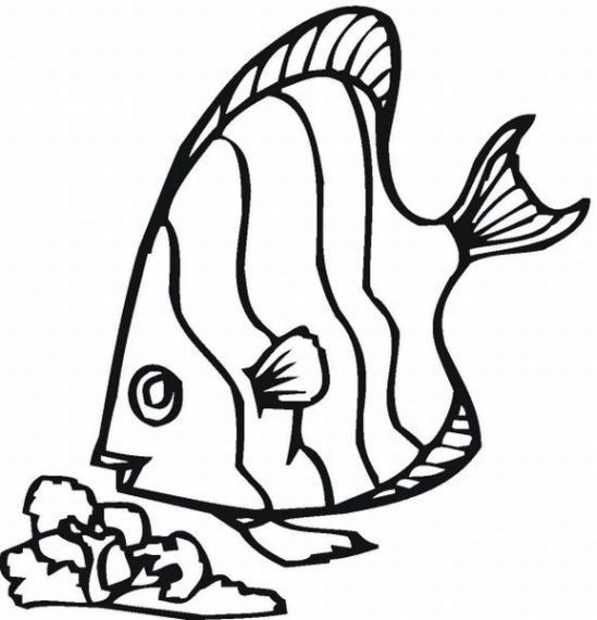549x571 Rainbow Fish Coloring Pages