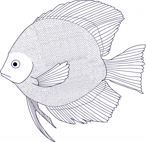 500x487 Black And White Fish Coloring Page