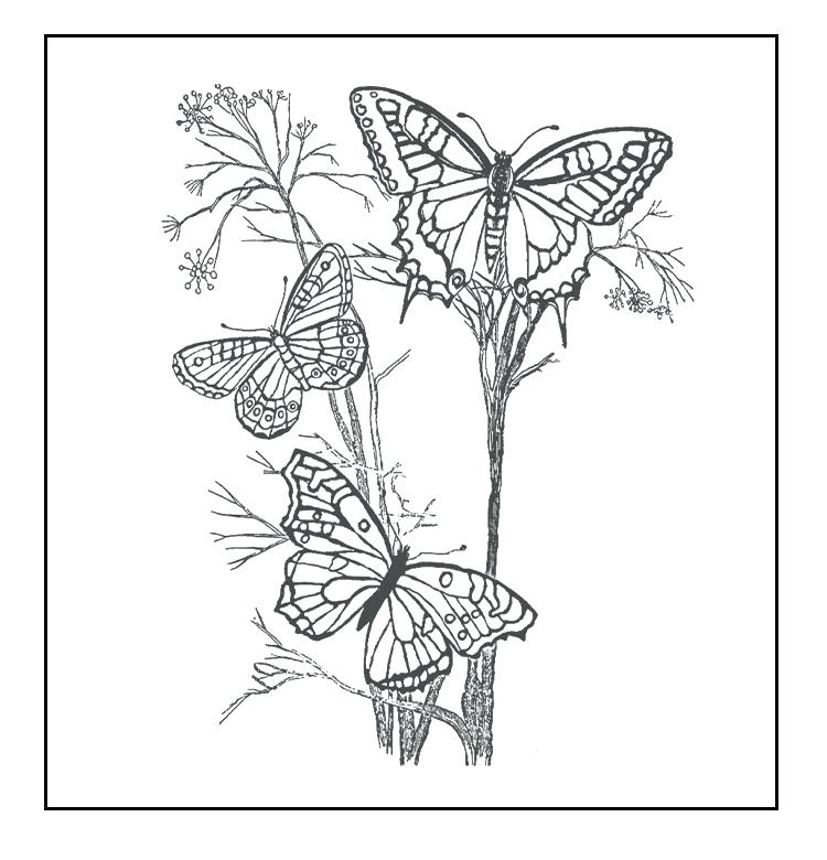 750x780 Free Butterfly Coloring Pages Free Butterfly Coloring Pages Free