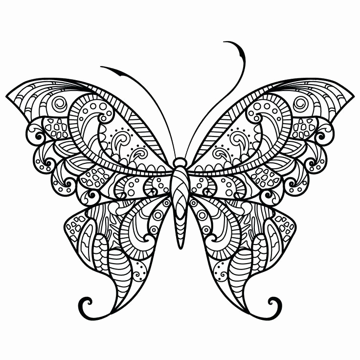 736x736 Free Butterfly Mandala Coloring Pages Collection Simple Butterfly
