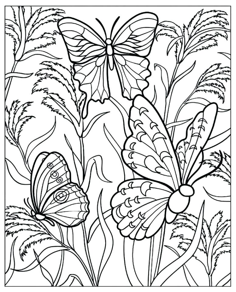 776x960 Printable Butterfly Coloring Pages Click The Monarch Butterfly