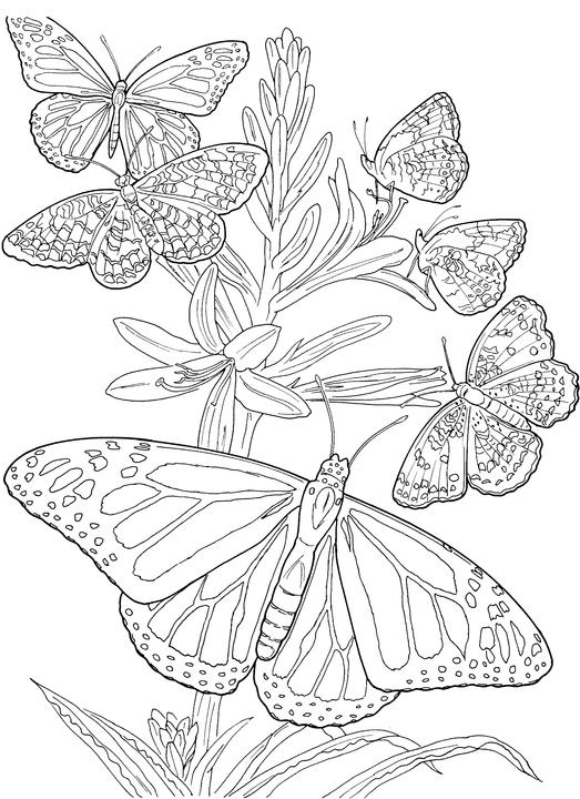 523x720 Six Butterfly Adult Coloring Pages Free Printable Coloring Pages