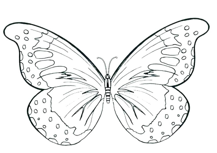 850x600 Free Butterfly Mandala Coloring Pages