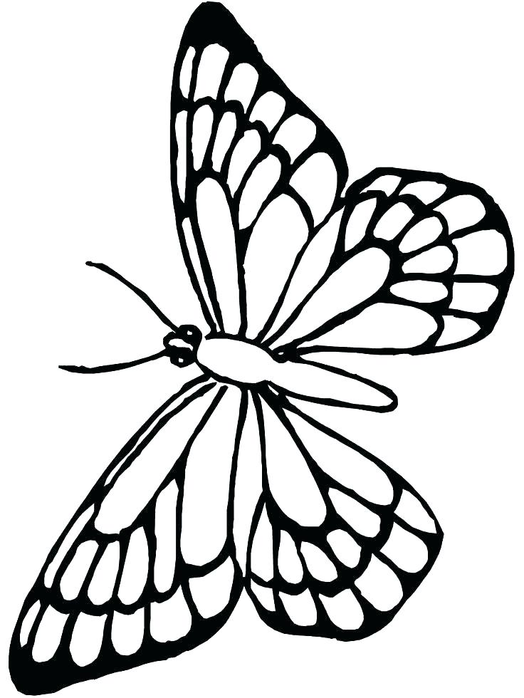736x980 Butterfly Outline Coloring Page Butterfly Outline Coloring Page