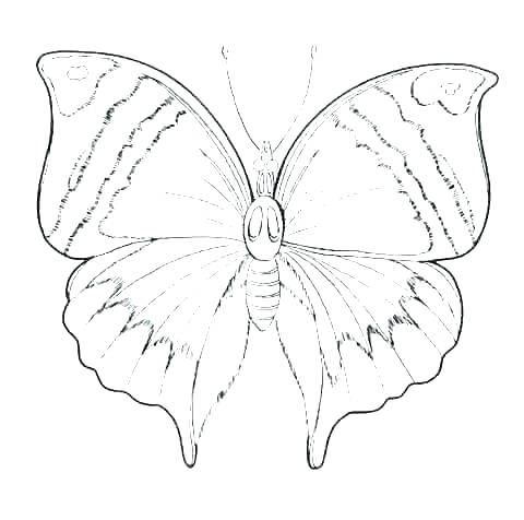 480x476 Butterfly Outline Coloring Page